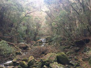 犬鳴山七宝龍寺 初詣 参詣路