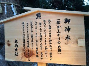 大鳥大社 初詣 神木 根上がりの大楠