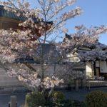 河内西国 西方院 山門 桜