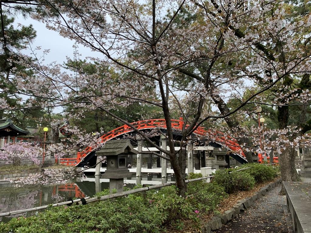 住吉大社 桜
