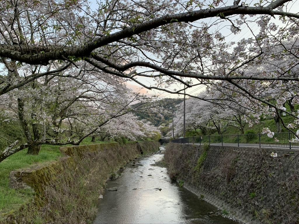 山中渓 山中渓駅 トンネル 桜