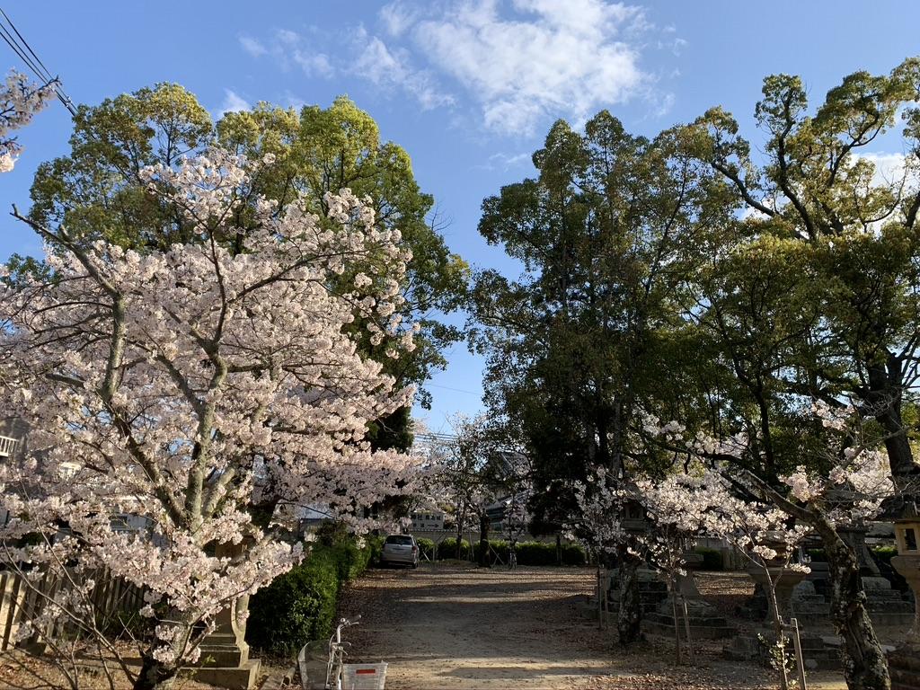 波太神社 境内 桜