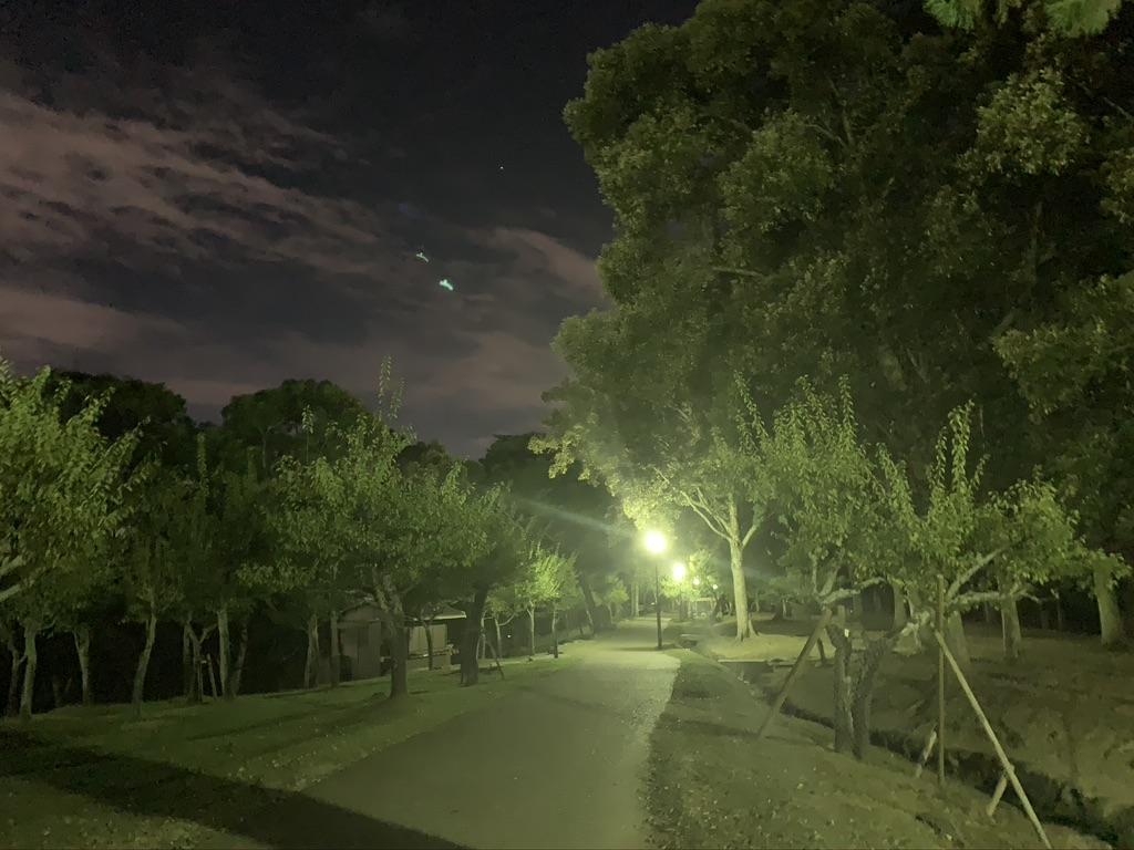 奈良公園 夜間