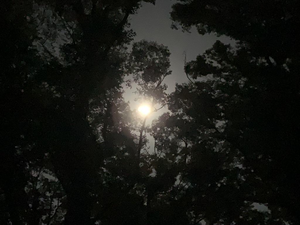 下鴨神社 糺の森 中秋の名月