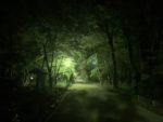 下鴨神社 糺の森 参道