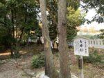 市杵島姫神社 夫婦杉