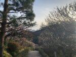 中山寺 中山観音公園 梅林