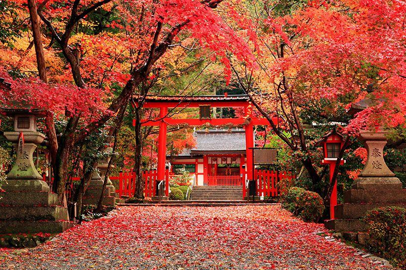 大原野神社 紅葉 そうだ 京都、行こう。公式ホームページ